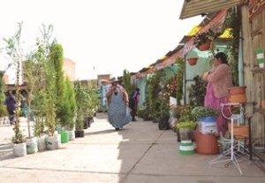 Feria de Floricultores en El Alto
